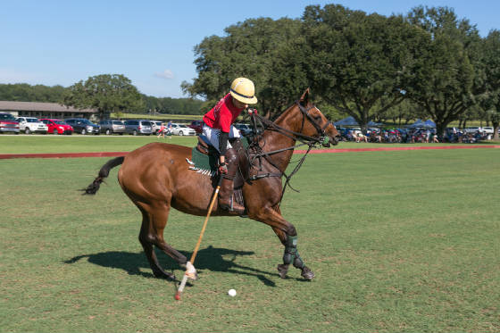 OxfordPolo/_5D_2893.jpg